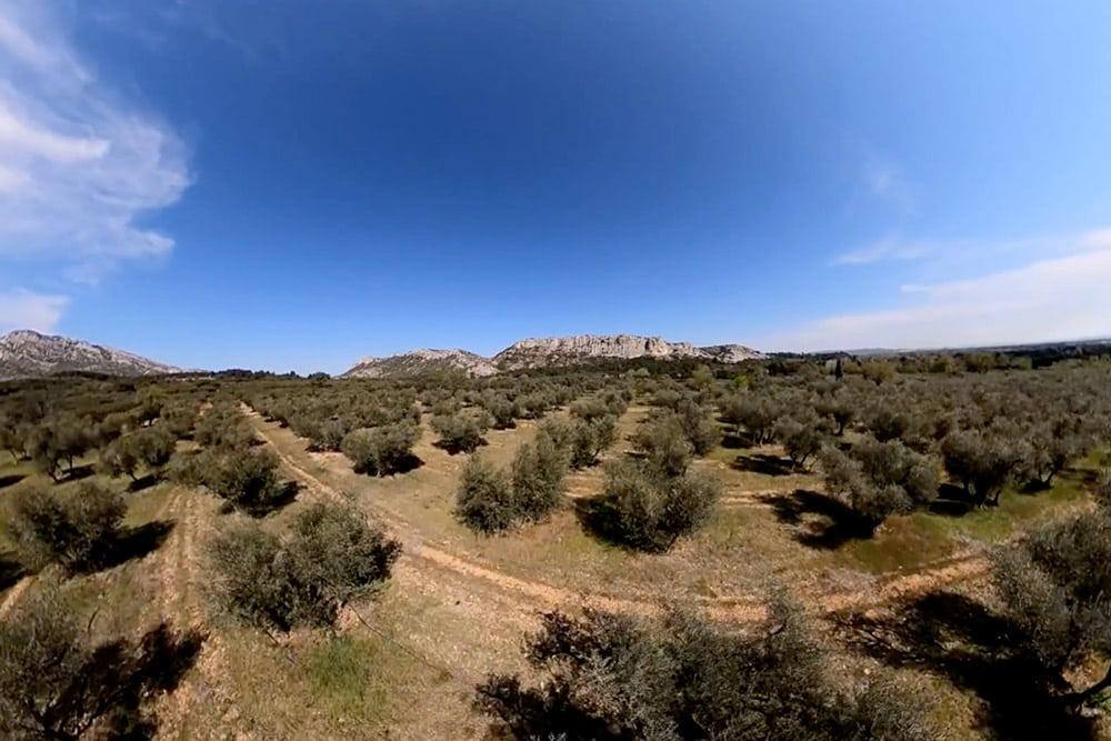 Les champs d'oliviers font la beauté des paysages des alpilles. Que serait la Provence, son histoire et sa culture, sans la diversité de ses paysages ? Des territoires montagneux des Alpilles, de Sainte-Victoire et de la Sainte-Baume aux plages de la Côte d'Azur et des calanques en passant par les grandes étendues de Camargue, la Provence offre une richesse naturelle unique au monde. C'est sur ces terres grandioses que des hommes, un jour, ont bâti les villages perchés du Luberon, la ville d'Aix, ses mille fontaines et ses petites places ou le majestueux château de La Barben. Un patrimoine naturel et architectural à visiter dans les yeux de l'aigle de Bonelli.